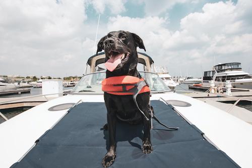 dog boatgating tailgating