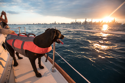 life jackets for dogs
