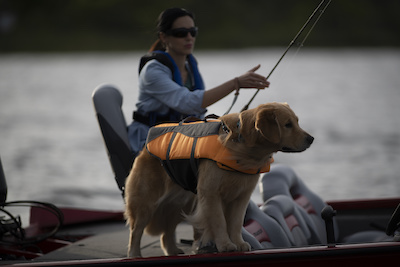 tips for boating with your dog