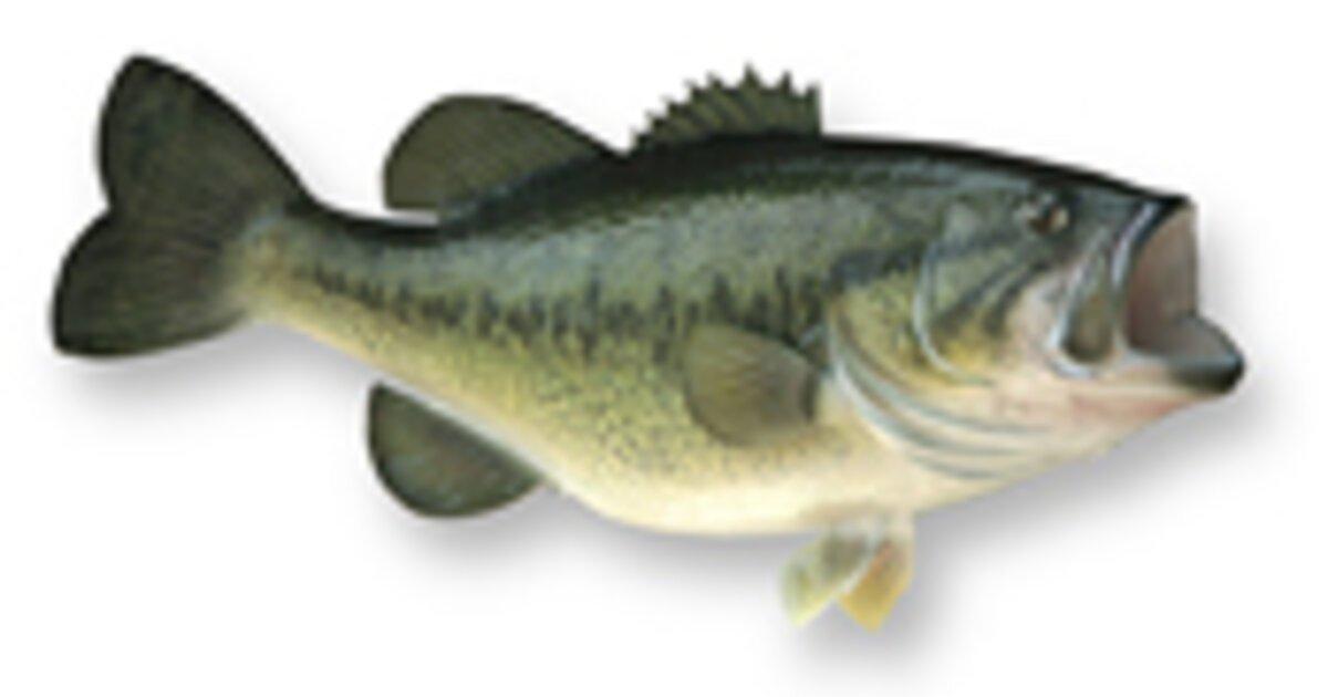 Bass Fishing Largemouth Bass Discover Boating